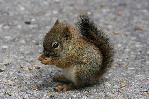 baby-squirrel.jpg